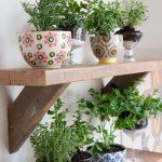 Những cách trồng rau gia vị từ đồ cũ cực dễ làm