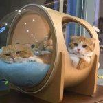 Những ý tưởng sáng tạo thiết kế góc riêng của thú cưng nhà bạn
