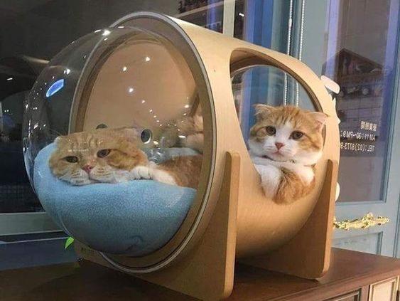 Giường ngủ sang chảnh không phải meow nào cũng có đâu nhé